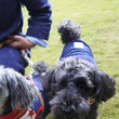 髭犬祭2016-2 …