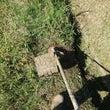 秋の草刈りレクレーシ…