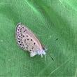 夏の奄美大島〜昆虫編…