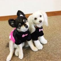 手作りワンピ(犬服)
