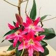 毎年恒例 お花の作品…