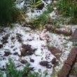 雪が~冬が~((+_…
