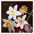 バランスの難しい花