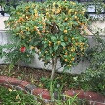 サロンの庭に秋の香り