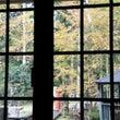 秋の化粧に…「森の小…