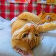 猫カフェで人生のパー…