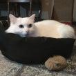 猫の防災グッズ、準備…