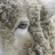 羊もかなり好きです