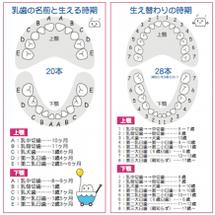 子供の歯が生える時期…