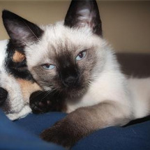 犬猫の問題行動の予防…