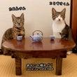 猫さんたちのお茶会に…