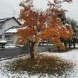 雪と紅葉 北海道 東…