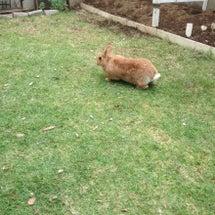 ウサギさんとお庭