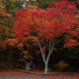 ◆紅桜公園@澄川◆