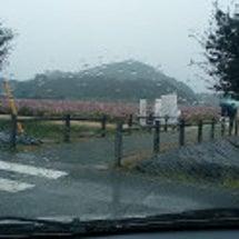 笠岡道の駅コスモス畑