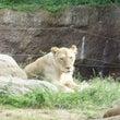 天王寺動物園から新世…