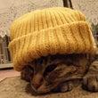この時期、風邪に気を…