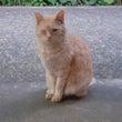 虐待エリアの猫・トラ…