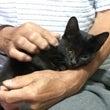 黒子猫さん、甘えた過…