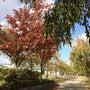 こた散歩「日中線記念…