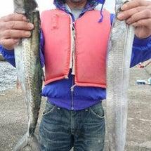太刀魚とサゴシとアジ…