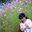 秋桜とお誕生日