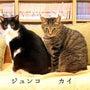 猫式通院難易度(20…