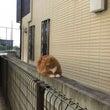 野良猫さん??