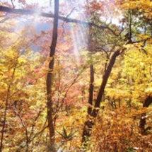 登山道の紅葉も終盤戦…