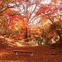 【11月東京近郊・紅…
