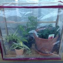 イチゴの温室
