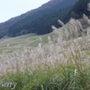 箱根 仙石原のススキ