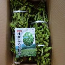 今年度のご注文の枝豆…