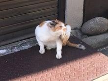 川崎のネコ