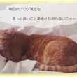 ネコの寝言・・・