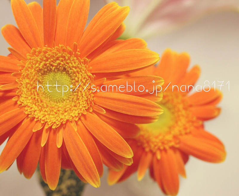 PhotoGrid_1477384824171.jpg
