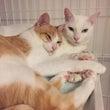 宮川家の猫事情