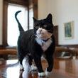 英国政府で働くネコた…