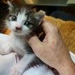 赤ちゃん猫の命をつな…