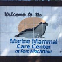 * Marine M…