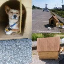 「家付き捨て犬」から…