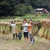 自然農の田んぼクラブ…