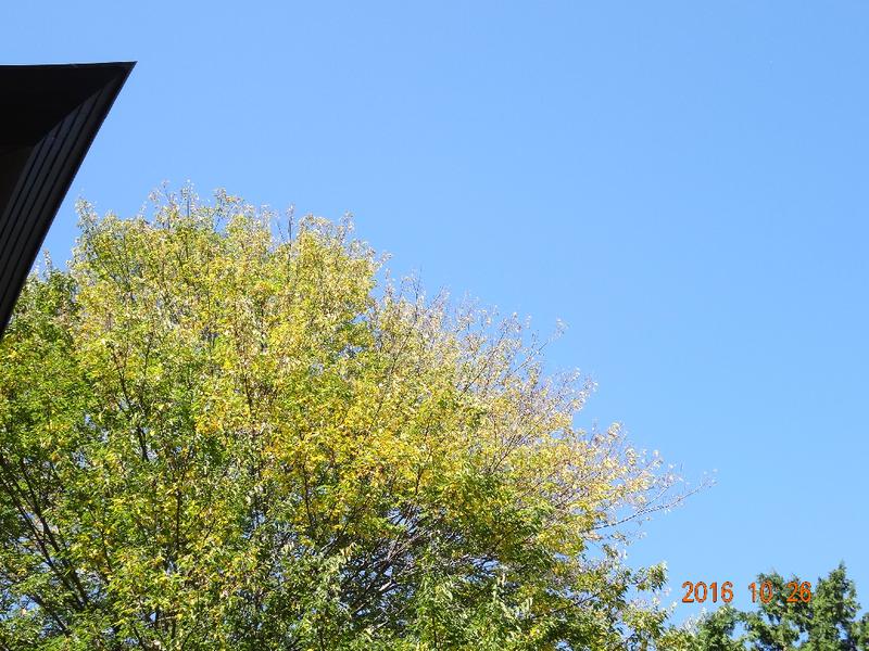 ゆりの花保育園