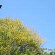 神社♪「ゆりの花保育…