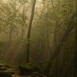 自然美に見惚れる森あ…