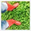 赤い長靴の男