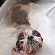 バブル浴     モ…