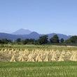 富士山とぉ~秋バージ…