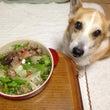 シニア犬ライフ・愛犬…