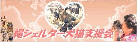 中国の楊さん犬猫支援バナー